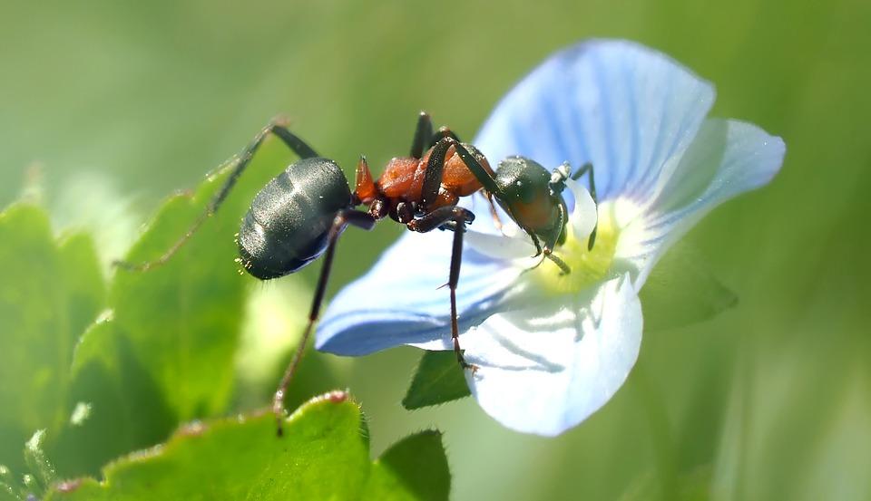 mravenci náhled